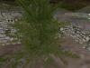 graveyard_tree